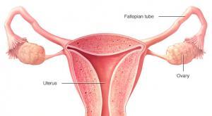 صورة: التعرف على أعراض سرطان الفرج